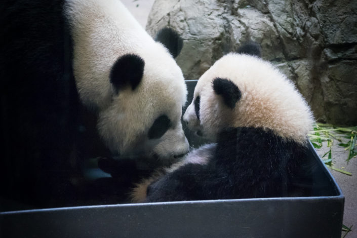 Bei Bei and Mom