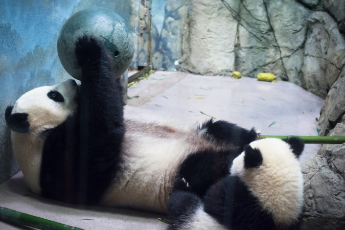 Mom and Bei Bei